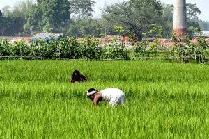 HZL empowers farmers amid COVID, through flagship