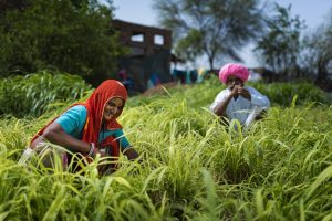 CSR: BALCO's Vedanta Agriculture Resource Center benefits over 1000 farmers